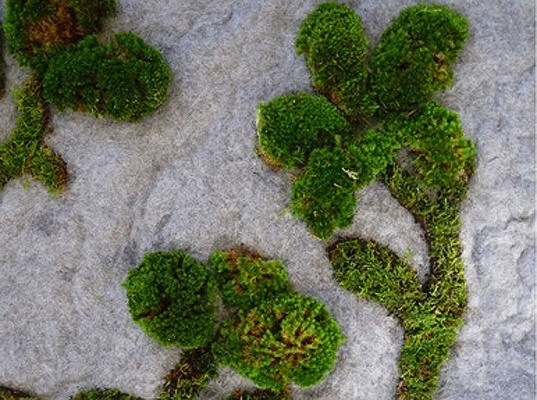 green design, eco design, sustainable design, Garden Rug, Pia Wustenberg, Indoor Garden, Apartment Living, home garden