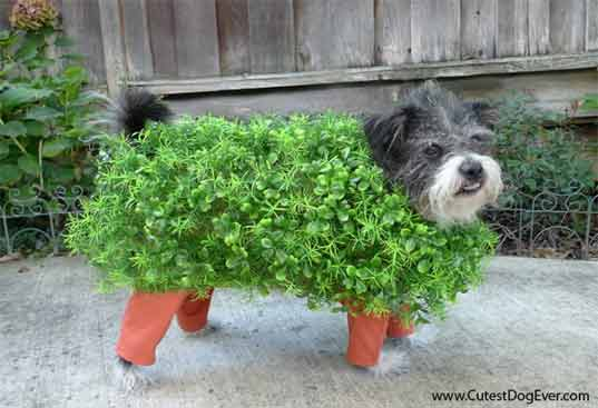 Diy how to make an adorable chia pet dog costume for halloween chia pet dog costume halloween halloween dog costume eco costume diy halloween solutioingenieria Image collections