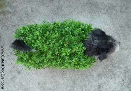 Chia Pet Dog Costume For