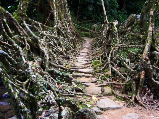 living architecture, root bridges, living root bridges, tree roots, architecture, eco design, sustainable architecture, sustainable design, sustainable building, green design, green building, green architecture, eco design, living bridges of Cherrapunji,