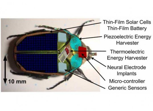 insects, biomimicry, insect cyborg, cyborg, insect robot, robotic insect, tiny robots, robot technology, robotic technology, renewable energy, energy generation, self generating energy, motion energy capture, clean energy, sustainable energy, insect research, university of michigan