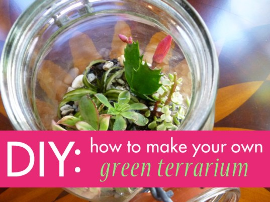 Diy How To Make Your Own Green Terrarium To Keep Or Give