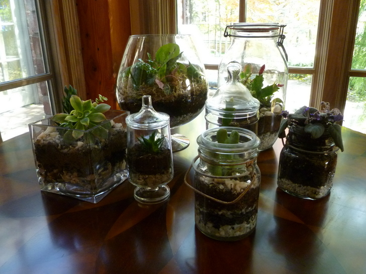 Diy How To Make Your Own Green Terrarium To Keep Or Give Away For