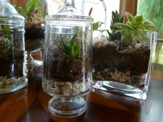 http://inhabitat.com/wp-content/blogs.dir/1/files/2011/11/DIY-Terrariums-Bridgette-Meinhold-77-537x402.jpg