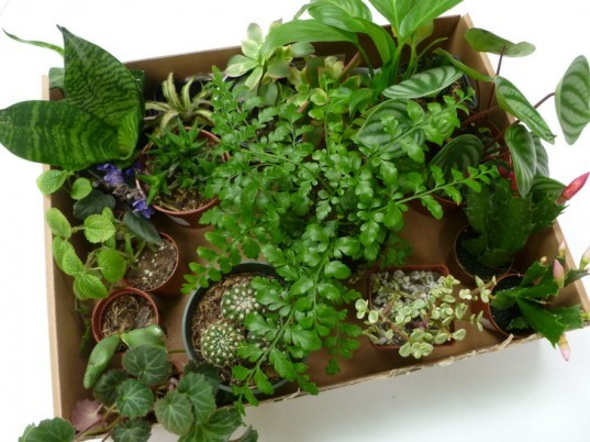 DIY Terrariums, terrariums, how to make a terrarium, diy, green gift, green diy,
