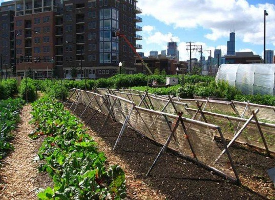 food demand, agricultural demand, urban agriculture, agricultural technology, food technology, agricultural advancements, earth population, human population, food needs, food growth, urban farm, urban gardening, urban food source, urban food solution
