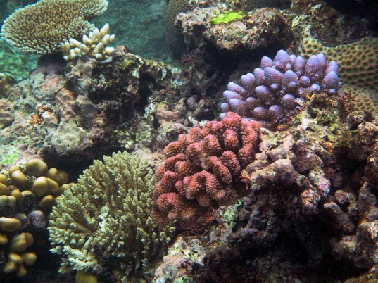 endangered coral species, cryo