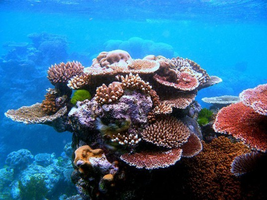 Great Barrier Reef, Australia, Coral Sea Commonwealth Marine Reserve, environmental protection, sustainable design, great barrier reef, marine reserve, world's largest marine reserve