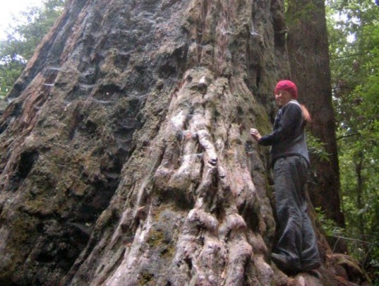 treehugging, tree hugging, trees good for health, matthew silverstone, blinded by science
