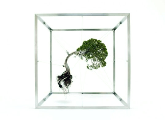 makoto azuma, botanical art, shiki formula, bonsai tree art, fragile tree installations, japanese artwork, tree art