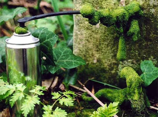 Stories from Space, Moss Graffiti, moss, garden moss, gardening, green design, sustainable design, green graffiti, eco-design, vertical garden, outdoors, plants, botanical