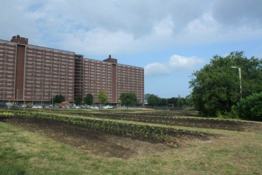 cleveland ohio, the cleveland kid, post-recession urban gardening, urban farming, vacant plots, abandoned houses, land lots, derelict land