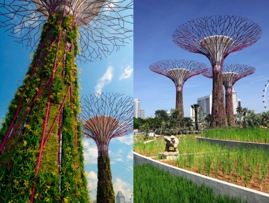green design, eco design, sustainable design, Gardens by the Bay, Grant Associates, Supertrees, Bay South, SInapgore, indoor garden, solar power, rainwater harvesting, natural filtration, botanical garden
