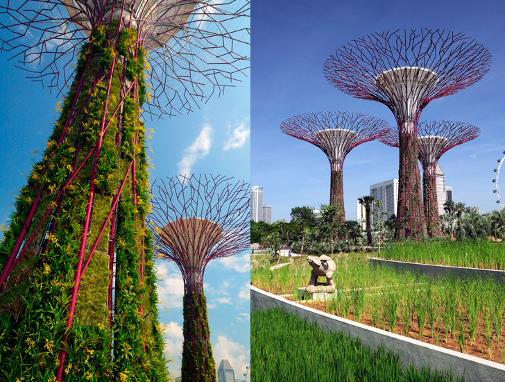 Singapore S Supertree Sprouting Gardens By The Bay Set To