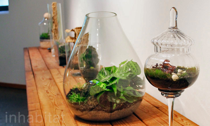 Dozens Of Beautiful Terrariums Now On Display At The Brooklyn
