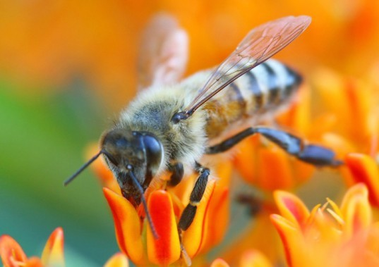 animals, environmental destruction, pesticides, pesticides and animals, bees, honeybees, pesticides and honeybees, nicotine based pesticides, honeybee decline, honeybee news, bees, bee news, neonicotinoid, chemical pesticides, chemicals and bees, news