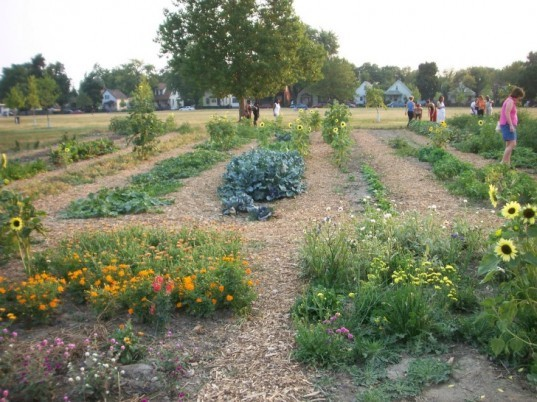 greening of detroit, urban decay, urban farming, agricultural projects, reclaimed land, planting trees, city regeneration, environmental intiatives