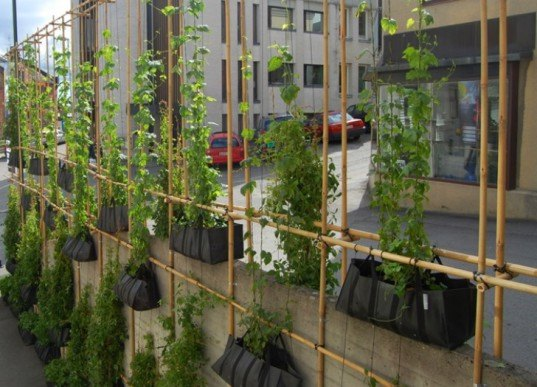 Green Wall, MMW architects, vertical garden, living wall, skien, norway, bamboo scaffolding