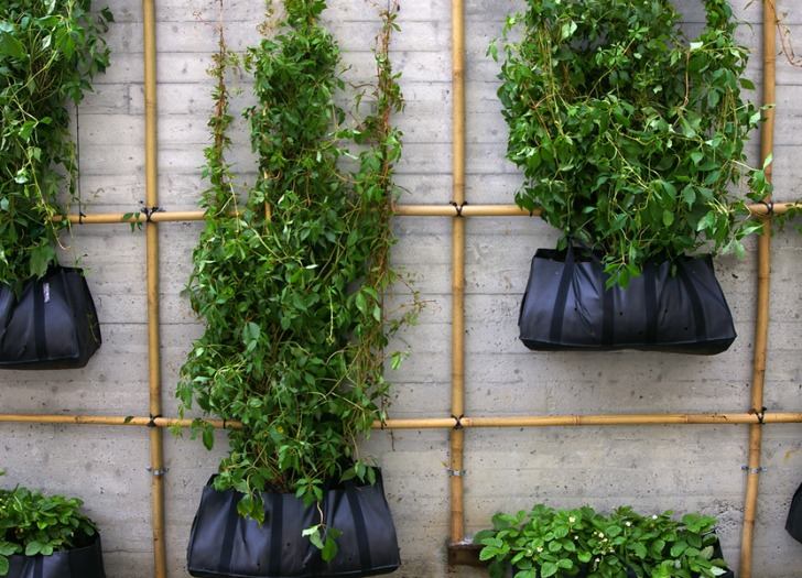 Climbing Green Wall Crafted From Bamboo Scaffolding