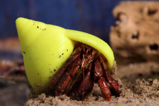 project shellter, hermit crabs, hermit crab shells, hermit crab shell crisis, 3d printing, 3d printed shells, 3d printing technology, makerbot, green pets, shell shortage, green shell solutions, green pet solutions, environment, environmental solutions, hermit crab solution, hermit crab 3d printing