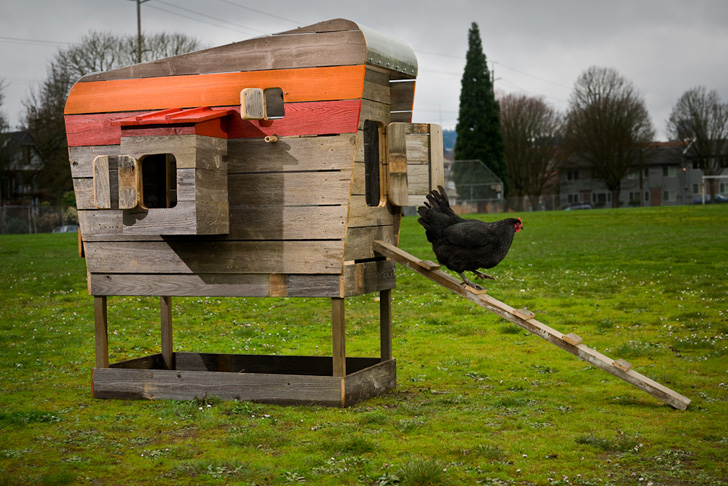 designer john wrights modern coop is a stylish hen house made from recycled wood inhabitat green design innovation architecture green building