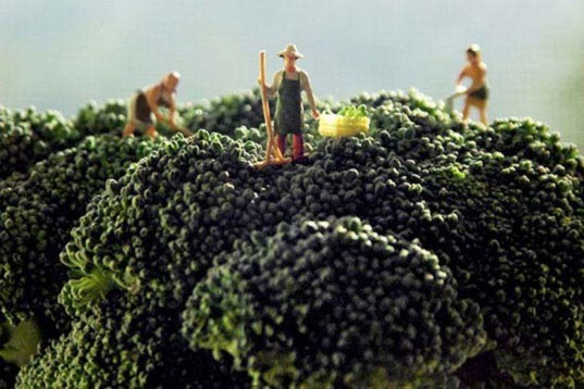 Matthew Carden, Small World, food, food photography, healthy eating, small landscapes