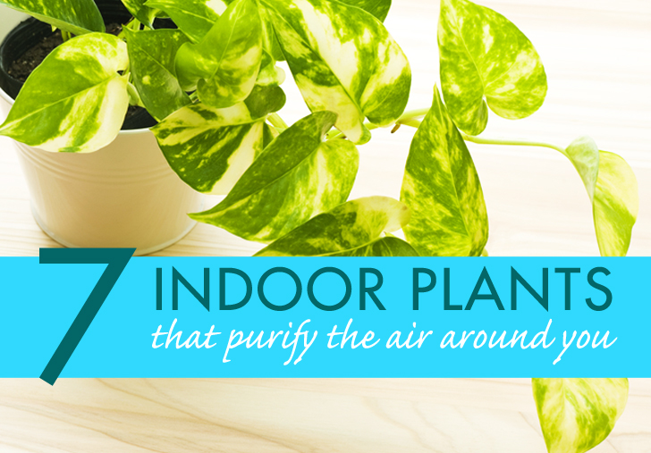 7 Indoor Plants That Purify The Air Around You Naturally Inhabitat