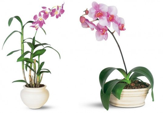 9 low-maintenance plants for the office | Inhabitat - Green Design ...