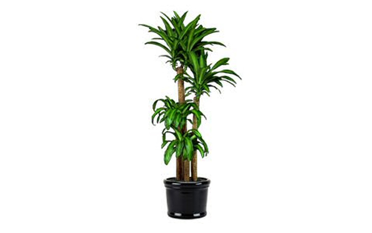 7 indoor plants that purify the air around you naturally inhabitat green design innovation - Small plants for indoors ...