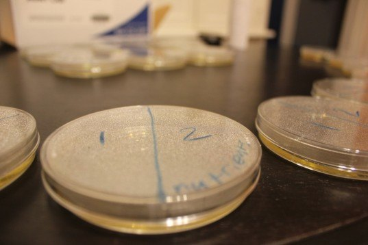 petri dish, science, biology, micribiology, fungi, fungus, science lab
