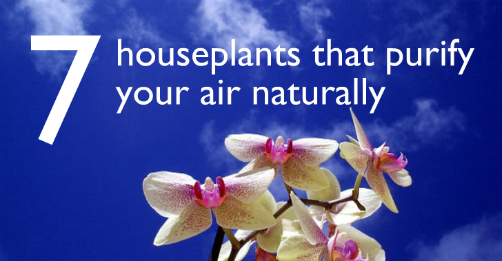 7 indoor plants that purify the air around you naturally on names of large indoor houseplants, names of common herbs, types of succulent houseplants, names of common trees, names of indoor houseplants safe, common poisonous houseplants, names of tall succulents, names of plants, palm trees as houseplants, names of common flowers, easy houseplants, best houseplants, names of common shrubs, plant houseplants,