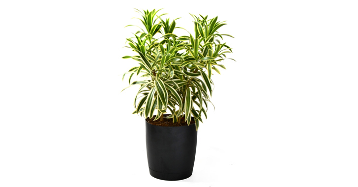 7 indoor plants that purify the air around you naturally inhabitat green design innovation. Black Bedroom Furniture Sets. Home Design Ideas