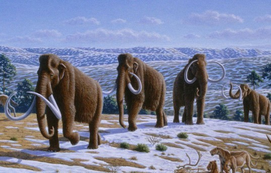 Woolly Mammoth, Hwang Woo-Suk, science, scientists, cloning, DNA, stem cells, South Korea, Russia, Siberia, permafrost, global warming, Hwang In-Sung
