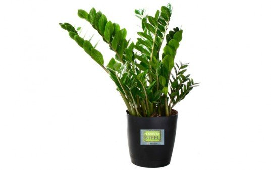 6 Hard to Kill Plants for the Recovering Brown Thumb, plants of steel, houseplants, hard to kill houseplants, hard to kill plants, plants that live a long time, low maintenance plants, easy to care for plants, costa farms, urban gardening, gardening, plants, plants that are hard to kill, what plants are hard to kill