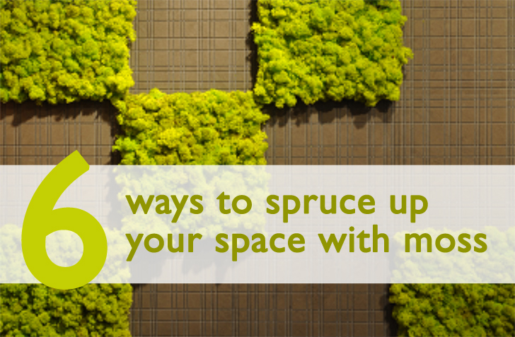6 Fuzzy Ways To Spruce Up Your Space Using Moss