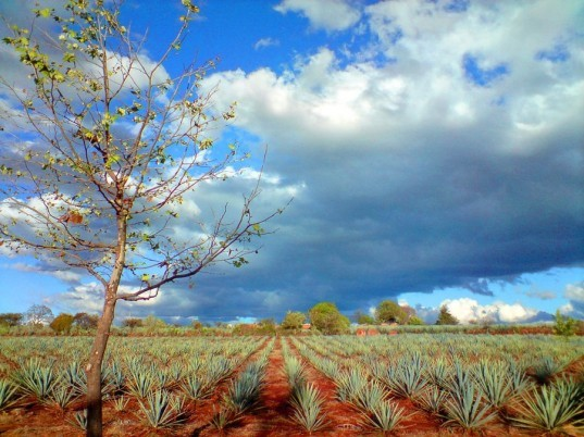 Casa Herradura, eco-friendly tequila, tequila production, eco friendly food companies, green alcohol companies, eco friendly alcohol companies