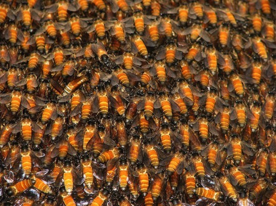 green design, eco design, sustainable design, colony collapse, bee population, bee decline, neonicotinoid, harvard University, parasitic diseases, Bulletin of Insectology