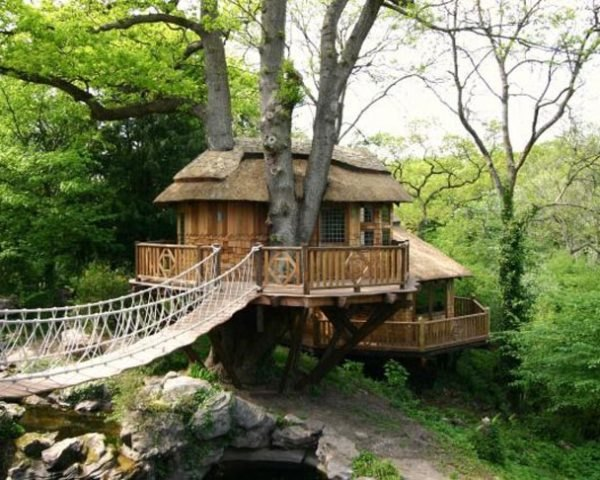 Blue Forest, Thatched roof, Cliffside Lodge, wrapped around a tree, western red cedar, rope bridge, hanging bridge, tree house, Green Materials, architecture, Treehouses