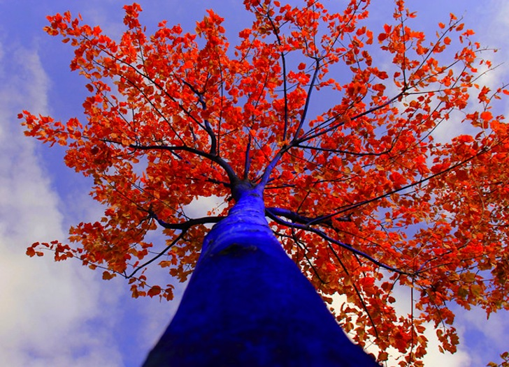Stunning Electric Blue Trees Spring Up In Seattle