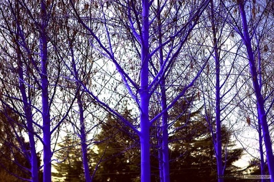 Avatar, The Blue Trees, Konstantin Dimopoulos, green design, sustainable design, eco-design, art, trees, seattle, westlake, vancouver biennale, canada, trees,