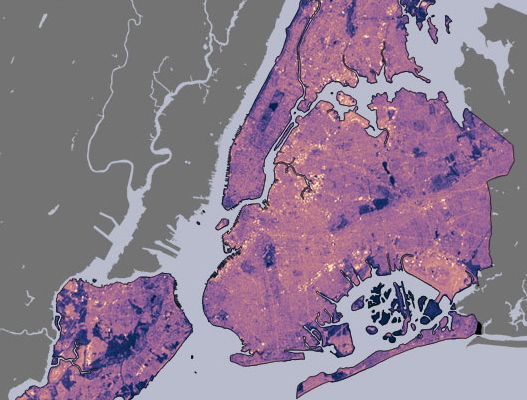 Cornell tree growth study, Urban Heat Island Effect, Urban tree, New York City trees, accelerated tree growth,
