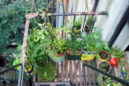 Easy Gardening Projects, Fire Escape Garden, indoor gardens, easy gardens, garden projects, easy gardening projects