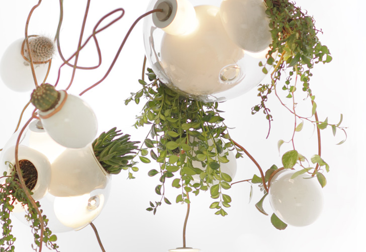 Omer abels gorgeous chandelier glows green with hanging succulents design aloadofball Images