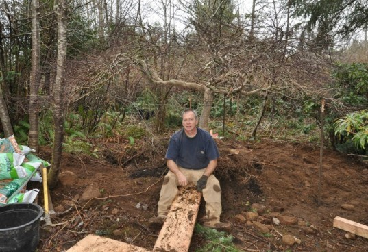 bernie obrien, seattle, tree rescue, tree rescuer, tree adoption, craigslist, rescuing trees, japanese maples, tree transplanting
