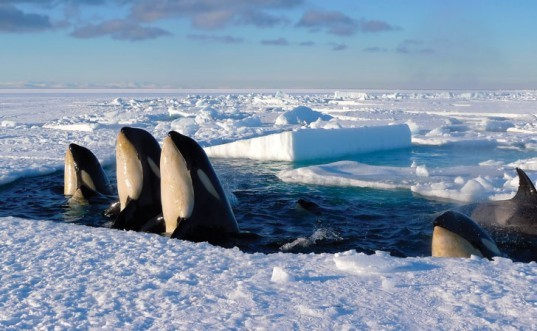 Frozen Planet, David Attenborough, BBC, wildlife documentary, movie review, resource conservation