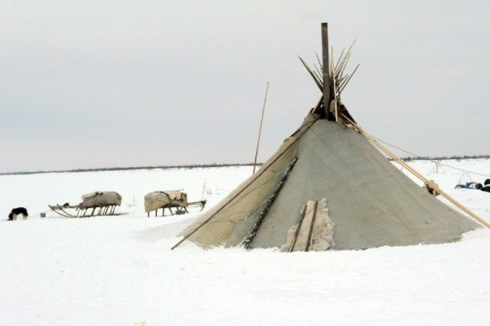 nenets tribe, raindeer herding, arctic environment, northern russian, nenets distric, oil exploration