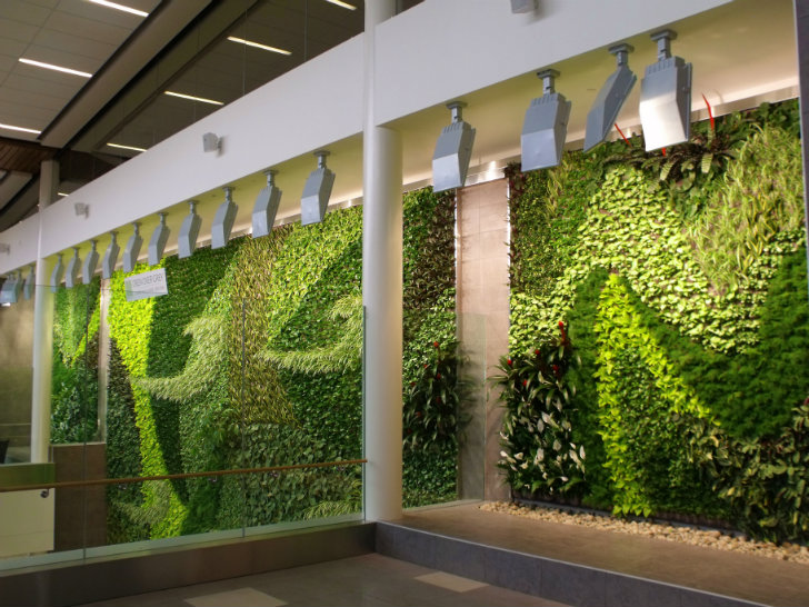 Edmonton Airport S Beautiful New Living Green Wall Works