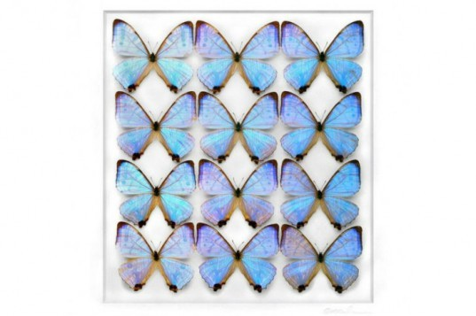 Christopher Marley S Mesmerizing Insect Mosaics Help