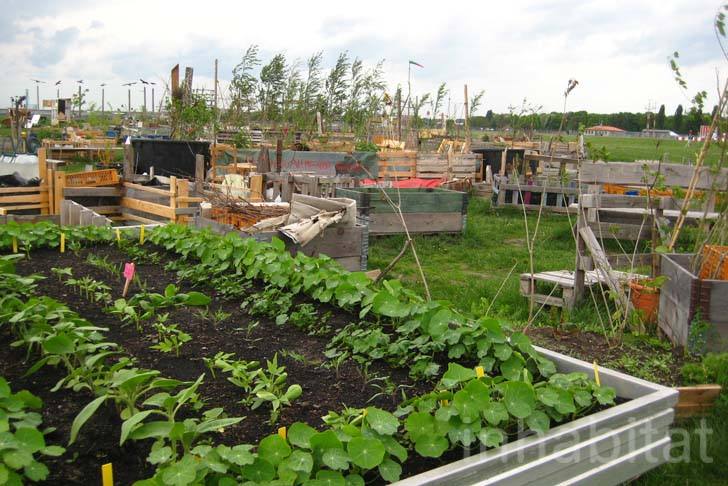 community garden city blooms in berlin 39 s abandoned tempelhof airport inhabitat green design. Black Bedroom Furniture Sets. Home Design Ideas