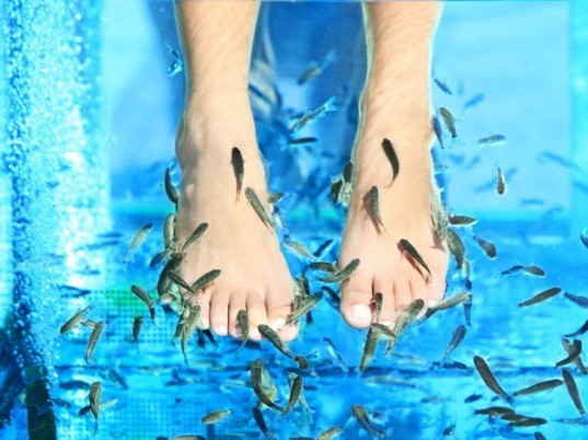 Fish pedicure, doctor fish, toothless carp, pedicure